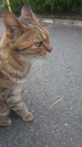 cat_in_futakotamagawa