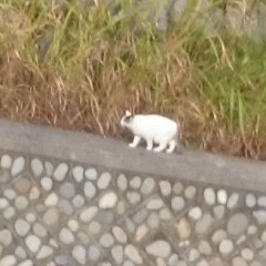 野川の野良猫