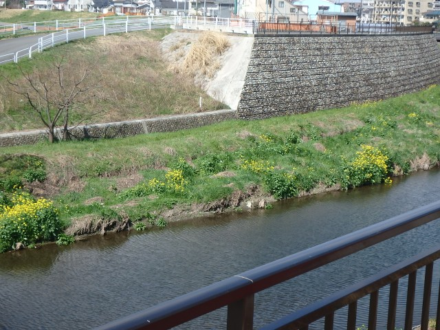 二子玉川 川沿い (3)