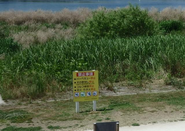 多摩川 禁止 看板